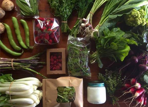 Little Owl Organic Vege Box